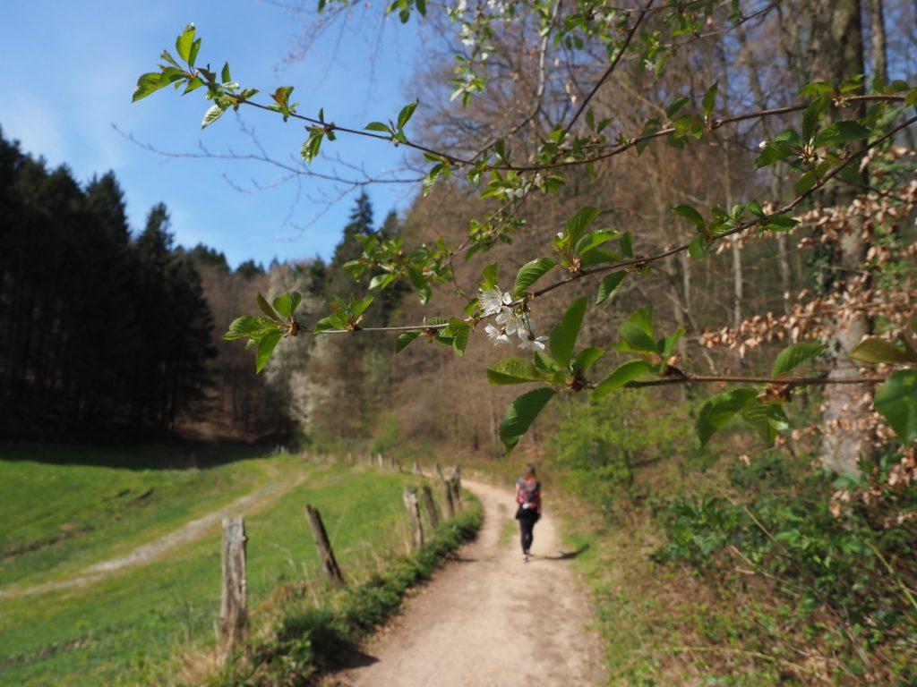TERRA.track Borgberg Hagen am Teutoburger Wald