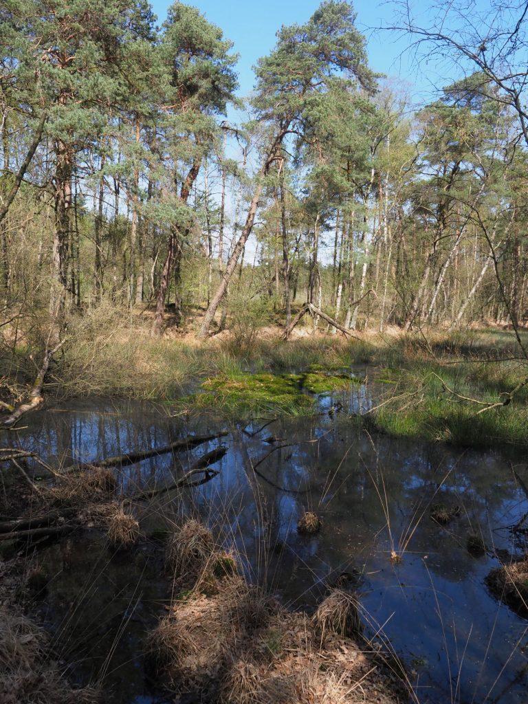 Moor Osnabrücker Land