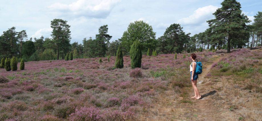 Heide wandeling in Duitsland net over de grens
