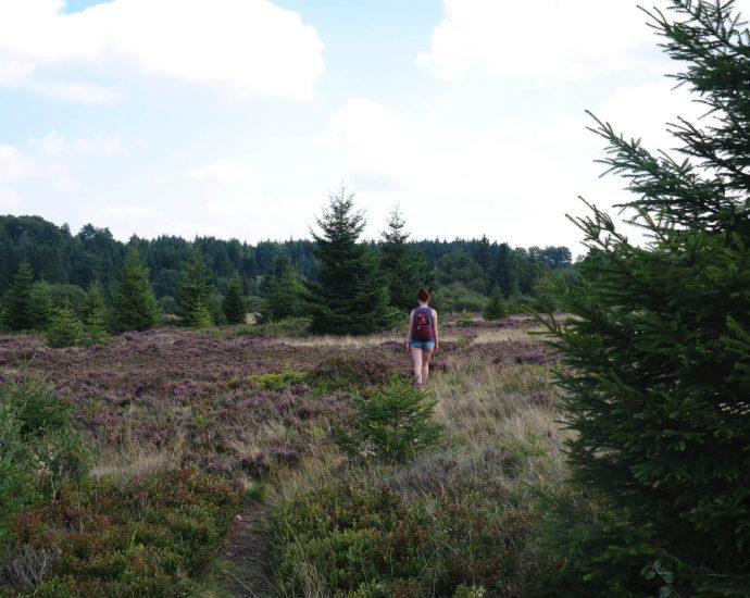 Niedersfelder Heide wandelen in het Sauerland