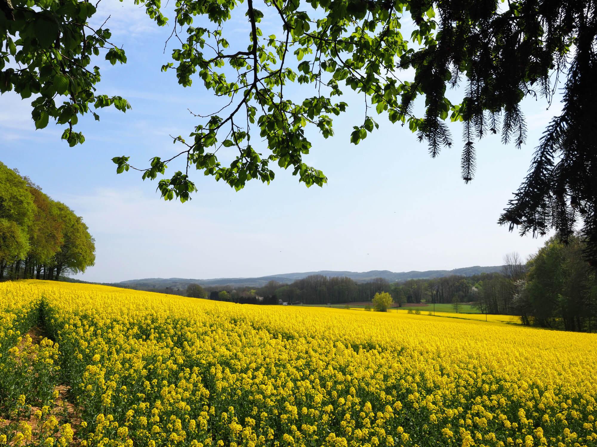 Actieve vakantie in Tecklenburg en het Tecklenburger Land
