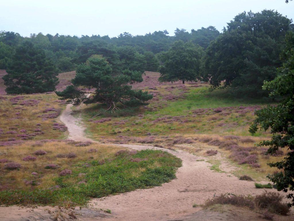 Wandelpad op de heide in het Münsterland