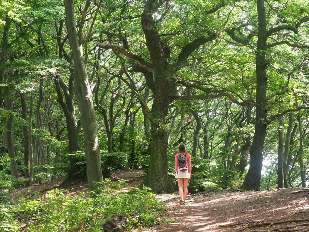 Wandelen tijdens vakantie in het Teutoburger Wald