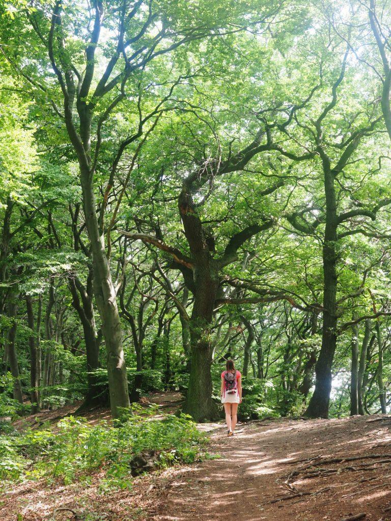 Wandelen in het Teutoburger Wald