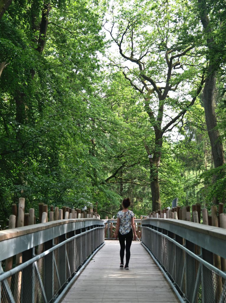 Wandelen op het boomkroonpad Bad Iburg