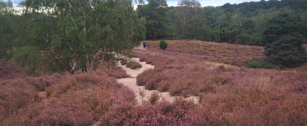 Wandelen op de Westruper Heide in het Münsterland net over de grens in Duitsland
