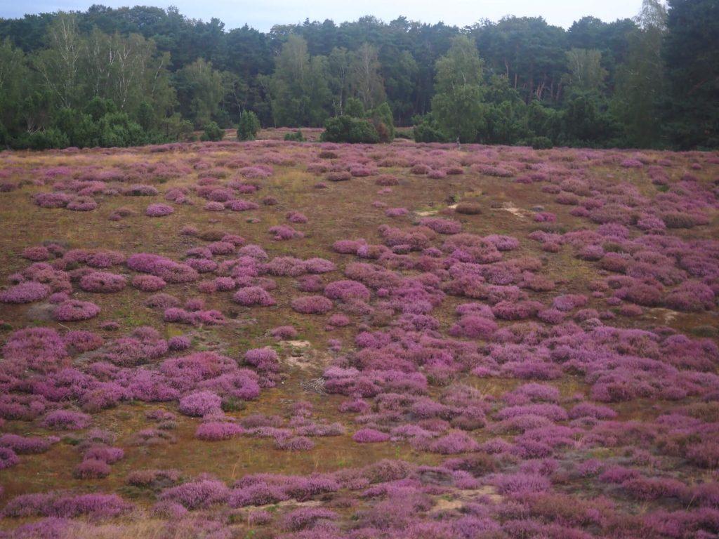 Westruper Heide wandelen net over de grens in Duitsland