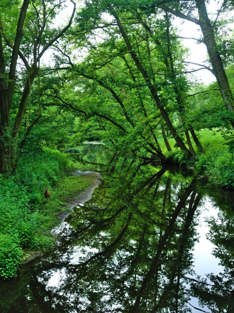 Natuur in Warendorf Duitsland