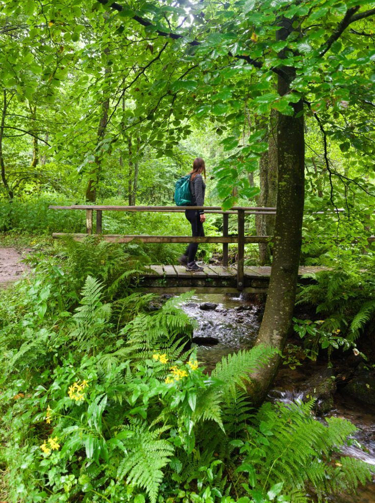 Bödenfelder Hollenpfad Sauerland wandeling